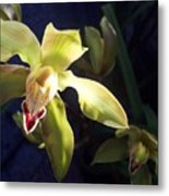 Yellow Cymbidium And Shadows Metal Print