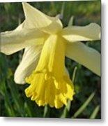 Yellow Daffodil 2 Metal Print