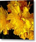 Yellow Daffodils 4 Metal Print