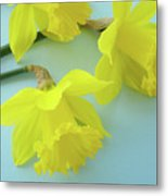 Yellow Daffodils Artwork Spring Flowers Art Prints Nature Floral Art Metal Print