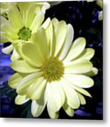Yellow Daisies Metal Print