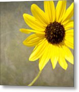 Yellow Daisy By Darrell Hutto Metal Print