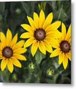 Yellow Daisy Metal Print