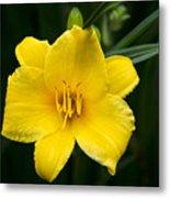Yellow Daylily Flower Metal Print