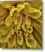 Yellow Dinner Plate Dahlia Metal Print