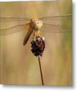 Yellow Dragonfly Metal Print