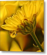 Yellow Drip Metal Print