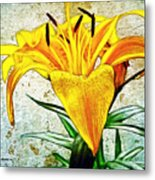 Yellow Easter Lily Metal Print