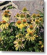 Yellow Echinacea, Straw Flowers Gray Stone Background 2 9132017  Metal Print