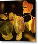 Yellow Fall Leaves Metal Print