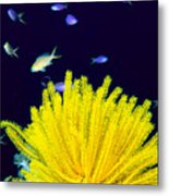 Yellow Feather Star Metal Print