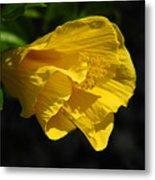 Yellow Fellow Metal Print