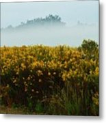 Yellow Field And The Fog Metal Print
