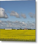 Yellow Fields And Blue Clouds Metal Print