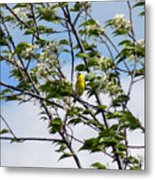 Yellow Finch And Flowers Metal Print