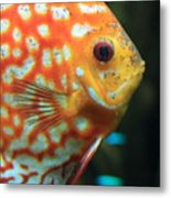 Yellow Fish Profile Metal Print