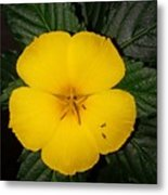 Yellow Flower 2 Metal Print