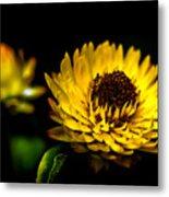 Yellow Flower 5 Metal Print