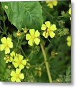 Yellow Flower And A Black Bug  Metal Print