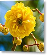 Yellow Flower Close-up Metal Print