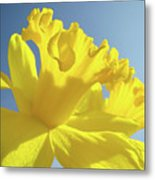 Yellow Flower Floral Daffodils Art Prints Spring Blue Sky Baslee Troutman Metal Print
