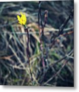 Yellow Flower In Dry Autumn Grass Metal Print
