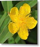 Yellow Flower Metal Print