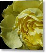 Yellow Flower On Black Metal Print