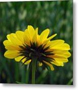 Underside, Petals, Yellow Metal Print