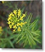 Yellow Flower Weed Metal Print