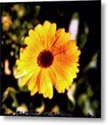 Yellow Flower With Rain Drops Metal Print
