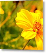 Summers Glory In Bloom By Earl's Photography Metal Print