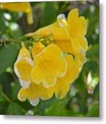 Yellow Freesias Metal Print