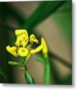 Yellow Flowers I Metal Print
