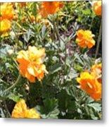 Yellow Flowers In May Metal Print