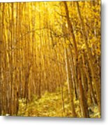 Yellow Forest Trail Metal Print