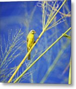 Yellow Fronted Canary Metal Print