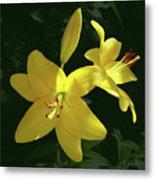 Yellow Garden Lilies Metal Print