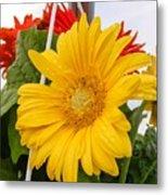 Yellow Gerbera Daisy Metal Print