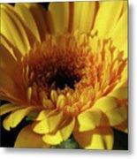 Yellow Gerbera Macro Metal Print