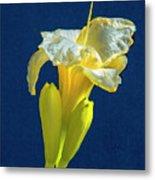 Yellow Glue Blue #f9 Metal Print