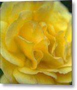 Yellow Golden Single Flower Metal Print