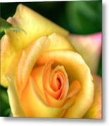 Yellow Golden Single Rose Metal Print