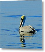 Yellow Headed Pelican Metal Print