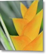 Yellow Heliconia - Hawaii Plants Flowers  Metal Print