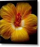 Yellow Hi Metal Print