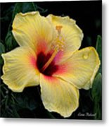Yellow Hibicus Metal Print