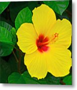 Yellow Hibiscus 3388 Metal Print