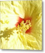 Yellow Hibiscus Close Up Metal Print