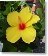 Yellow Hibiscus Shadows Metal Print